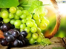 خواص میوه و سبزی ها در طب امام صادق ع