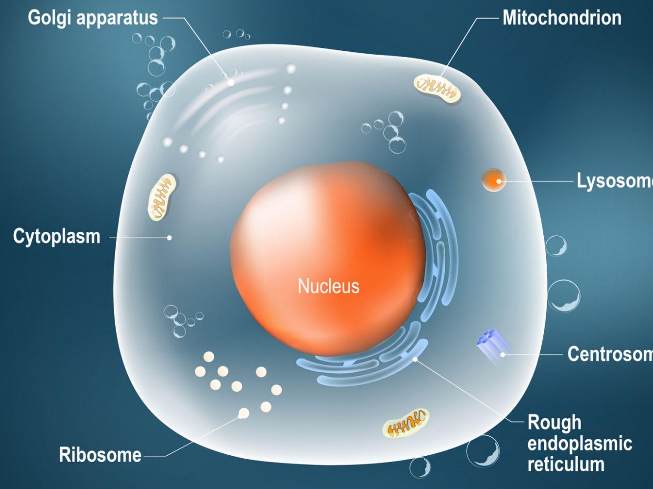 تکنولوژی mRNA شتابدهنده