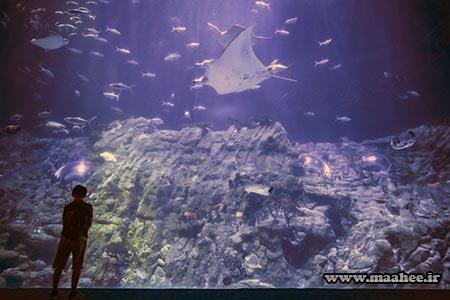 آسیا : آکواریوم عمومی پارک اقیانوسی هنگ کنگ