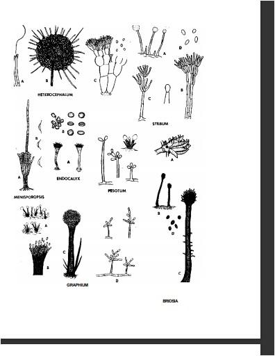 کتاب شناسایی قارچ ها