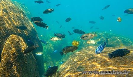 اکوسیستم های آفریقا : دریاچه مالاوی (Lake Malawi)