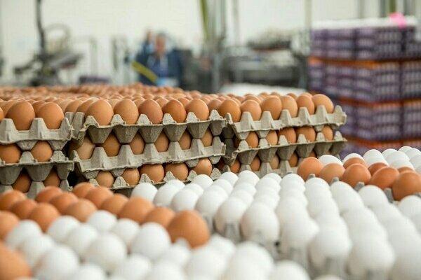کاهش ۳۰۰۰ تومانی قیمت هر شانه تخم مرغ