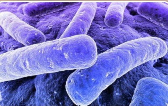باکتری سیاه زخم
